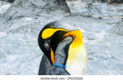 Penguins are a group of aquatic ,flightless  birds living almost exclusively in the Southern Hemisphere especially in Antarctica .animals