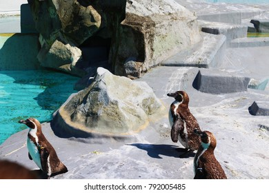 Penguins are a group of aquatic, flightless birds.