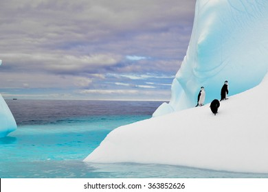Penguins in iceberg in antarctica pole