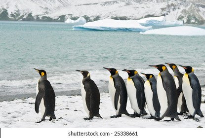 Penguins in icy bay