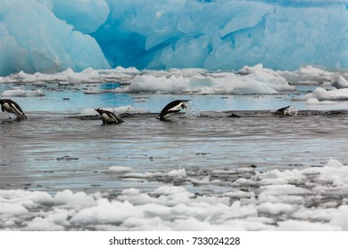 Penguins jumping