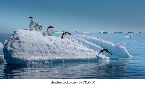 Penguins Jumping from Small Iceberg in Antarctica