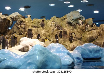Penguins in Loro Park (Loro Parque). Loro Park is one of the most famous parks in Europe, Tenerife, Canary Islands