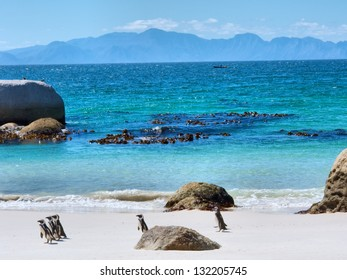 Penguins on beach, mountains on horizon. Shot in the Boulders Beach Nature Reserve, near Cape Town, Western Cape, South Africa.