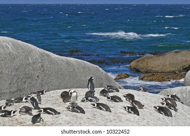 penguins resting