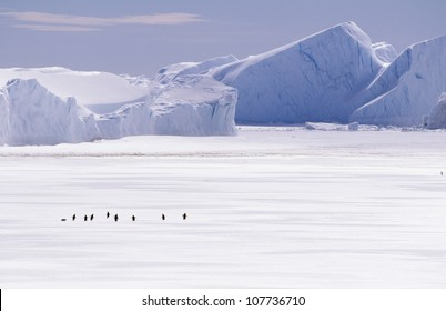 Penguins walking on ice
