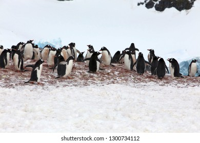 Penguins in the wild Antarctica