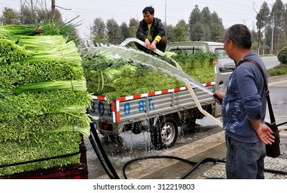 Pengzhou, China - March 12, 2013:  Farmers watering freshly picked garlic greens while awaiting weighing at a wholesale farmer's co-op market