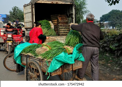PENGZHOU, CHINA - NOV 15, 2013:  Workers loading freshly harvested green onions from a bicycle cart onto a truck at a roadside farmer's wholesale co-operative market
