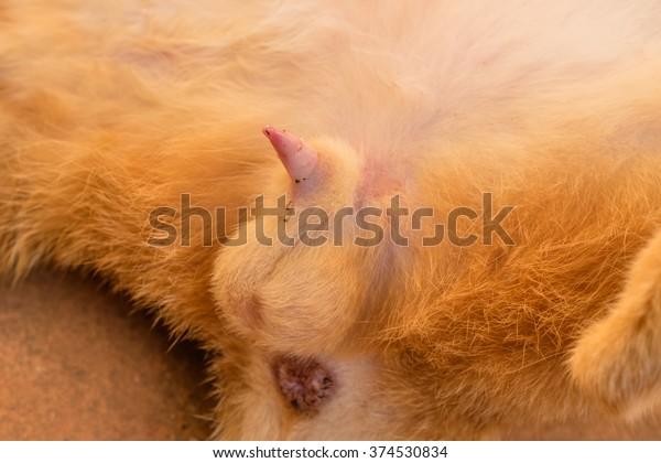 pics of cat penis