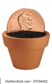 penny growing in flower pot macro