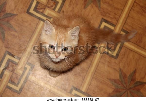 pensive cat with big eyes portrait