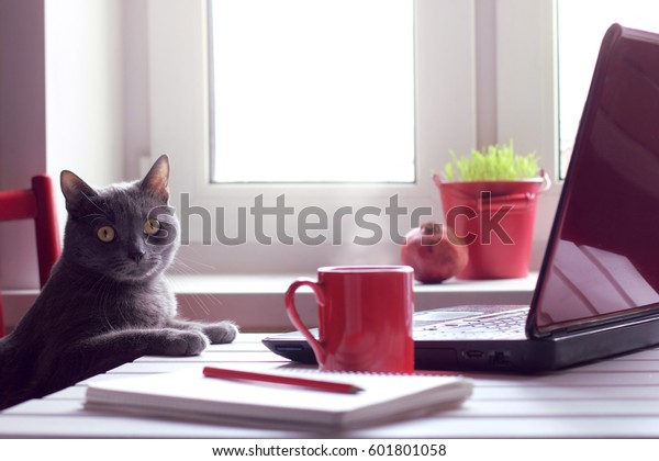 Pensive cat sitting at the table with laptop and red cup / tired of working make the coffee break