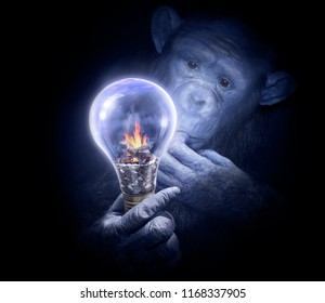 Pensive monkey observing a light bulb. Smart chimpanzee with intrigued look. Invention or solution search concept.