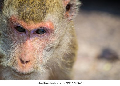 Pensive monkey. On Khao Sam Muk mountain in Bang Saen district living a lot of monkey. This place is located between Bangkok and Pattaya.