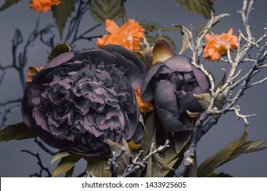peonies with blue buds, other garden flowers and a branch. Blue-gray background, studio shot.