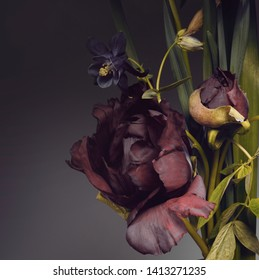 peonies and foliage on a dark background, botanical bouquet.