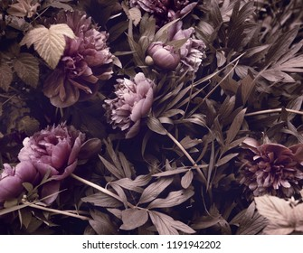 peonies in the garden, view from the top, natural background.