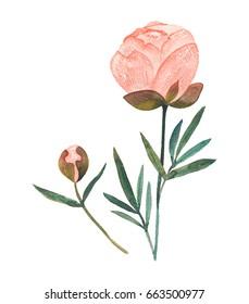 Single Watercolor Flower Images Stock Photos Vectors
