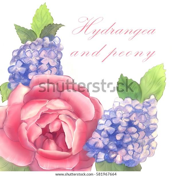 Peony and hydrangea. Watercolor. Set No. 1