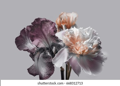 Peony and iris on a gray background, flower arrangement.