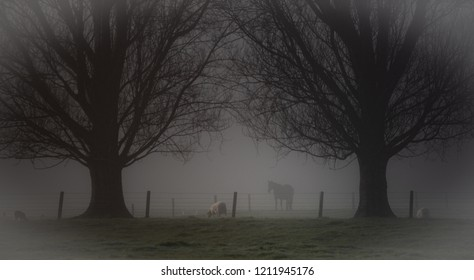 people and animals in the morning fog.