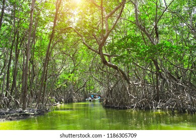 People boating in mangrove forest, the Ria Celestun lake, Mexico
