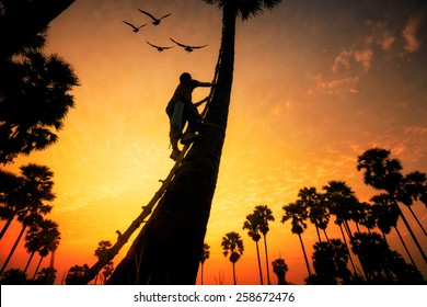 People with career climbing palm sugar at sunset
