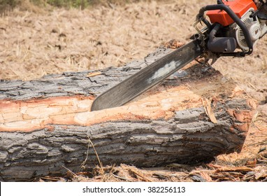 People are cutting down trees