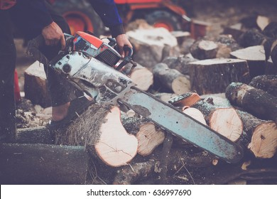 People cutting down trees.Timber Logging.Forest.
