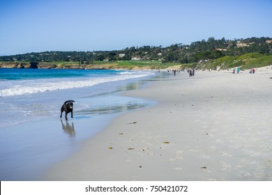 People and dogs having fun on the beach on a sunny day, Carmel-by-the-Sea, Monterey Peninsula, California