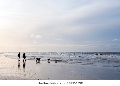 people and dogs stroll on north sea beach in dutch province of north holland on winter day
