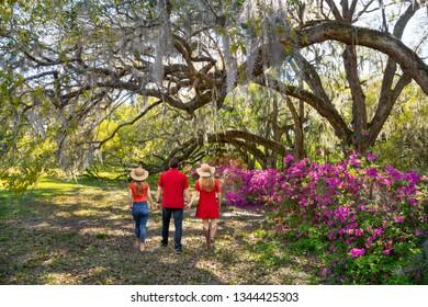 People enjoying beautiful park.Family walking in the garden on weekend spring trip. Azaleas in bloom under oak tree. Magnolia Plantation and Gardens, Charleston, South Carolina, USA