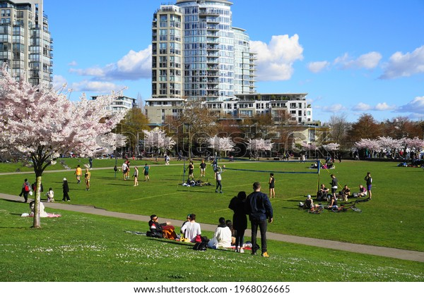 People enjoyng park on sunny day. Beautiful cherry blossom on background. Vancouver, BC, Canada. David Lam Park. April 04, 2021