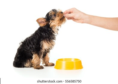 People are fed puppy food with hands