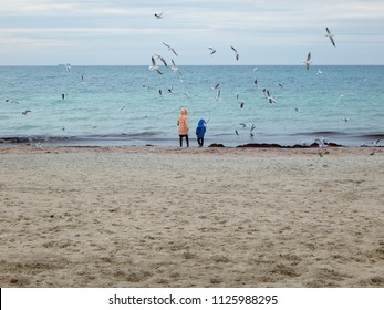 People feed gulls. Coast of the Caspian Sea. Kazakhstan.