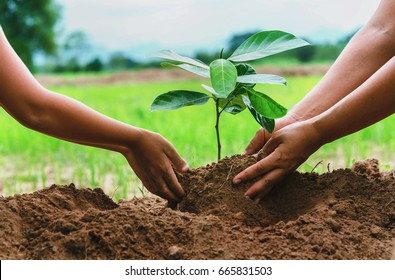 people hand helping plant the tree working together in farm concept save world