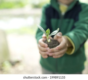 People hands holdings a little green plant