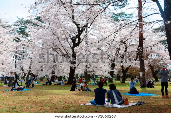 People have a picnic with their family or friends & admire beautiful cherry blossoms under huge Sakura trees in Omiya Park, Saitama, Japan ~ Hanami is a popular, traditional leisure activity in Japan