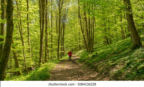 People hiking in the Harz mountains in Germany
