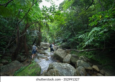 People hiking in tropical jungle along a stream, Ishigaki Island National Park of the Yaeyama Islands, Okinawa, Japan
