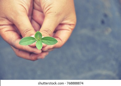 People human hand holding saving growing little tree of knowledge life, Go green concept.