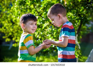 People kids sibling brother boy holding young plant in hands against green spring background. Earth day ecology holiday concept