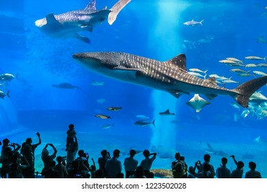 People making pictures of Whale Sharks in Aquarium