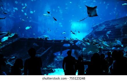 people observing fish in aquarium