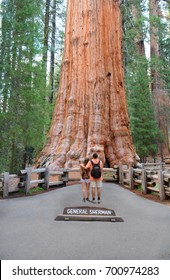 People on hiking trip in the forest. Couple with arms around each other looking at General Sherman  sequoia tree,    Giant Forest of Sequoia National Park in Tulare County California, USA.