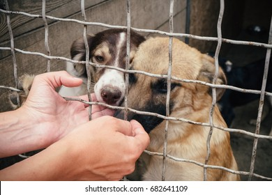 People save and help homeless dogs in animals shelter.