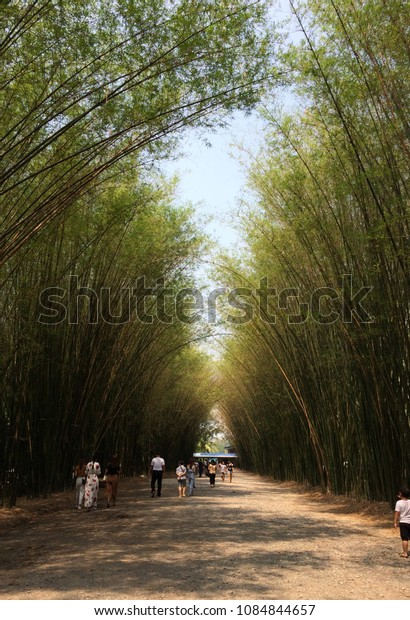 People sightseeing the bamboo tunnel  at Chulabhorn Wanaram temple.