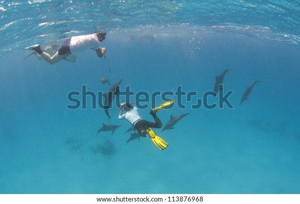 People snorkeling with a pod of wild spinner dolphins swimming underwater in a sandy lagoon