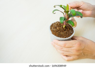 people stay home doing hobby hand holding spoon of stone and pouring into a plant pot